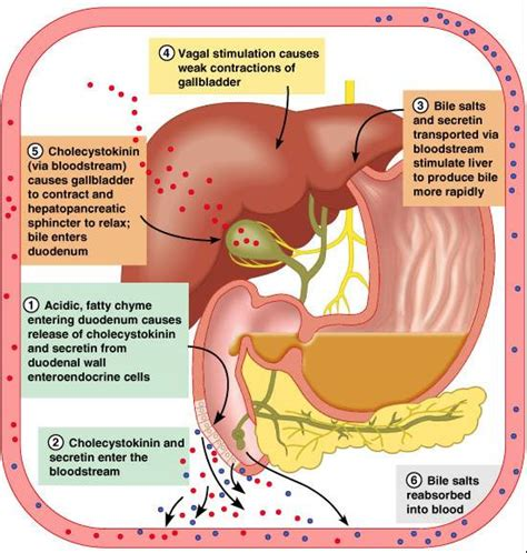 gall bladder disorders picture 15
