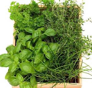 herbs like mulundo and abasi for growth of picture 23