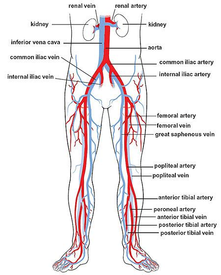 Blood circulation legs picture 5