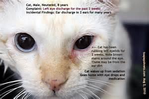 feline herpes virus picture 10