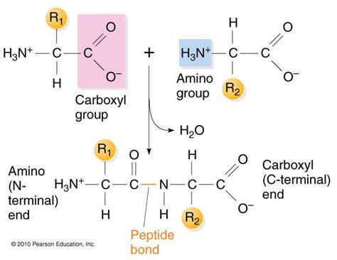amino acids and libido in women picture 7