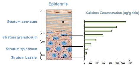 calcium and skin picture 11