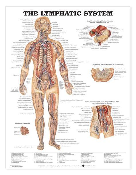 back pain detox colon picture 9
