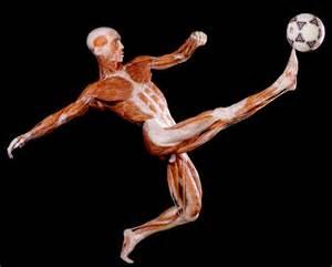 body picture 2