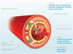 nitric oxide blood pressure picture 1