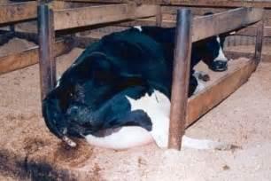 human growth hormones milk picture 6