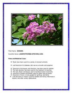herbal plants and scientific names picture 7