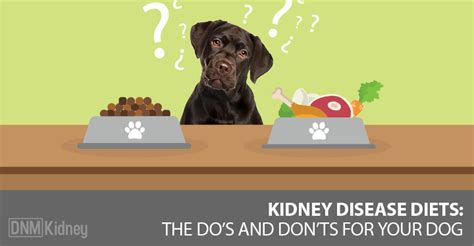 canine diet for kidney disease picture 15