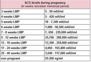 hcg levels during pregnancy picture 1
