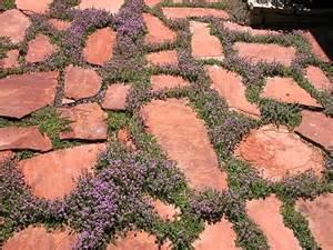 bulk irish moss picture 10