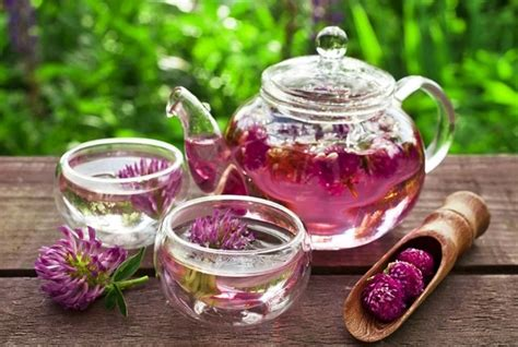 search : info about red clover tea picture 12