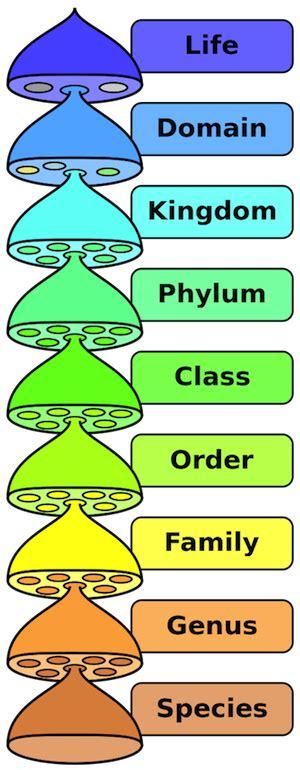 fungi kingdom picture 3
