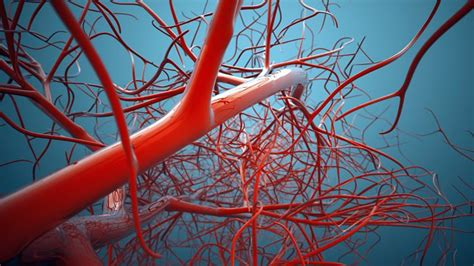 facts about the capillaries picture 14