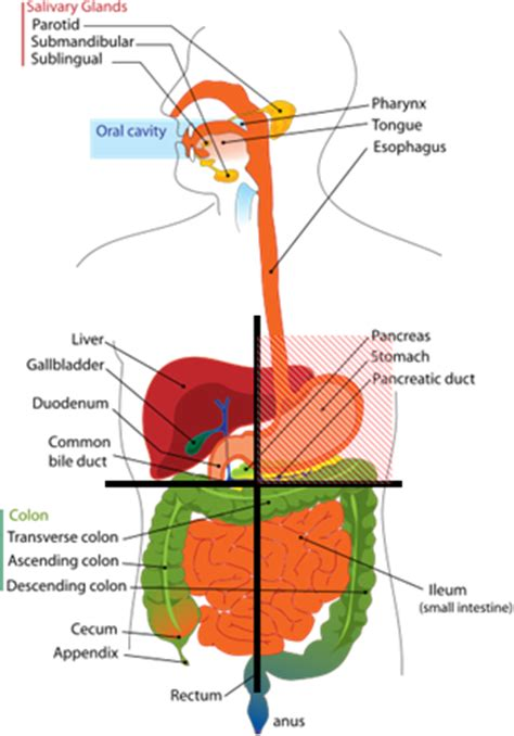 urinary bladder palpation picture 9