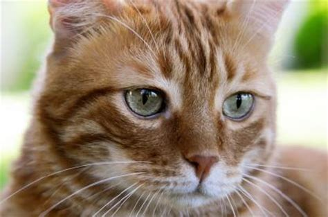 cats health picture 15