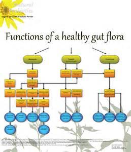 bowel flora picture 14