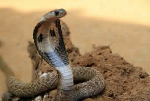 actual pictures of snakes h picture 2