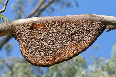 Natural Bee Hive picture 1