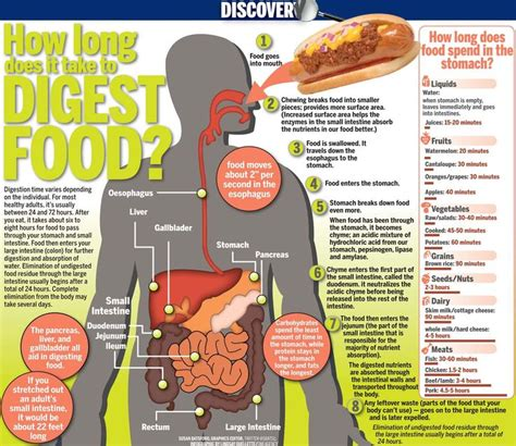 food digestion picture 13