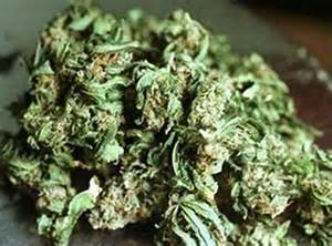 what does weed look like picture 2