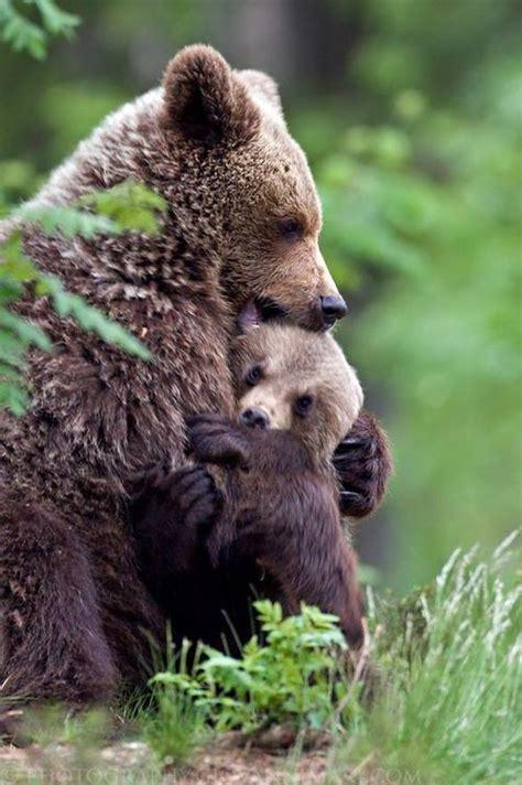 adirondack black bear sleep habits in spring picture 7