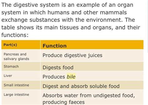 megaspore probiotic a,azon picture 6