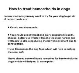 can dogs get hemorrhoids picture 9
