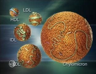 Very low good cholesterol picture 10