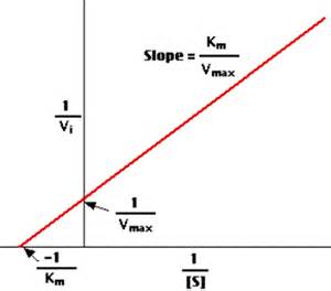 vmax units lineweaver burk plot picture 3