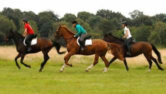 how to start home business equestrian picture 13