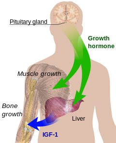 human growth hormone wiki picture 2