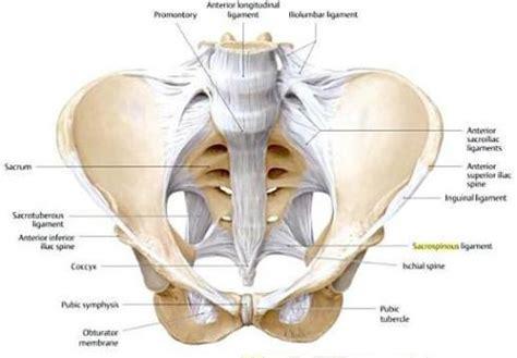 penis sprain picture 9