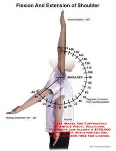 joint flexion rotation anatomy picture 9
