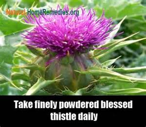 benefits of blessed thistle for women picture 1