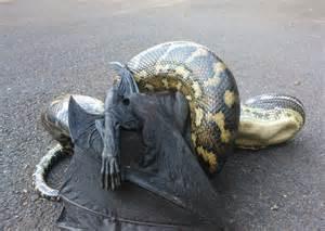 anaconda diet picture 17