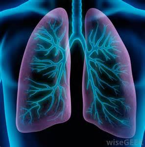 what systems does the liver work with picture 14