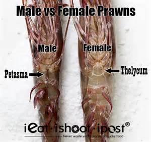 male sex organ detox picture 15