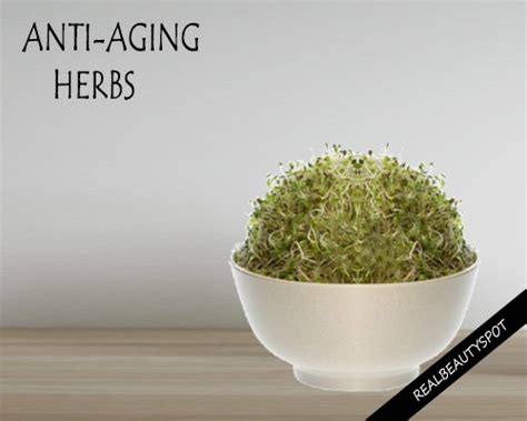 herbs to help an aging penis picture 3