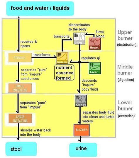 bladder flow picture 2