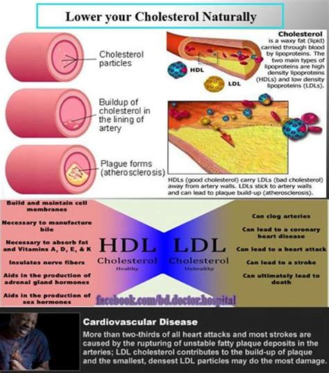 what are low in cholesterol picture 11