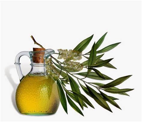 dandelion tea + oil of oregano remedy picture 1