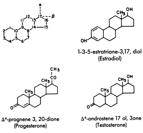 testosterone estradiol and progesterone picture 2