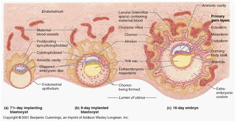 female part of zygote for antiaging picture 10