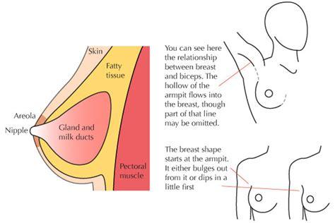 skin anatomy picture 1
