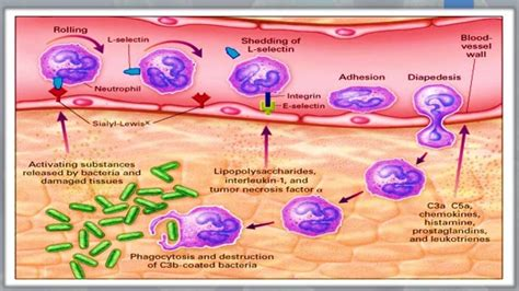 antimicrobial picture 9