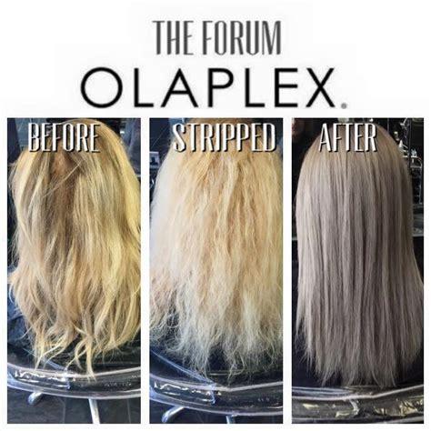 olaplex treatment beforeand after picture 10