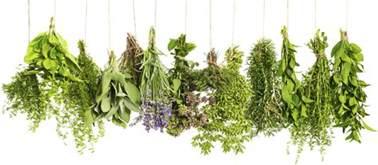 naive herbs in sri lanka picture 5