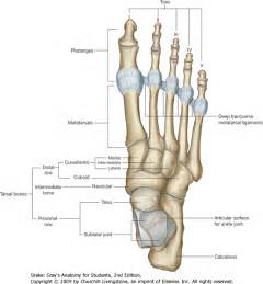 ankle joint picture 19