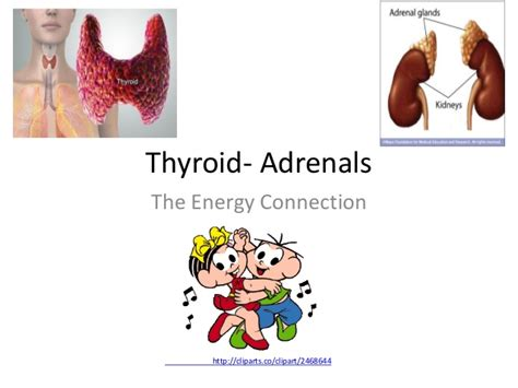 what herbs can prove a hypervascular thyroid picture 6