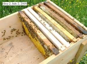 long deep hive picture 7